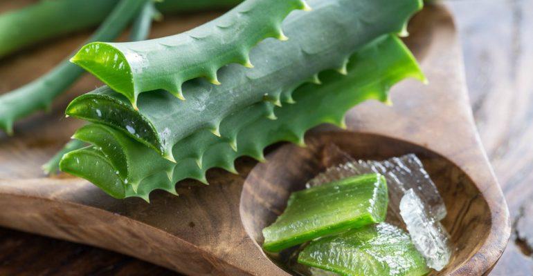 Conheça 5 ervas medicinais que aceleram o metabolismo